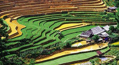 Tarp ryžių terasų (VNS)