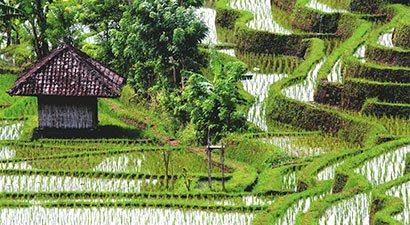 Balis - Dievų sala (JDS)
