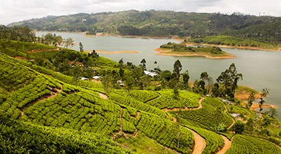 Šri Lankos lankos (SLH)