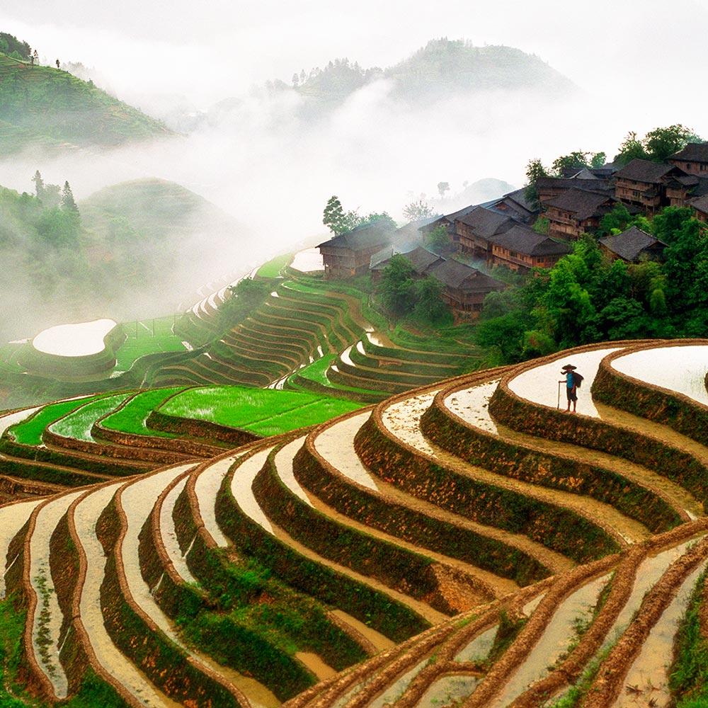 Рисовые террасы Dragonback - Китай